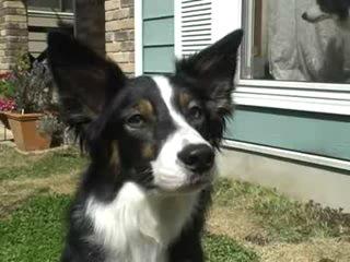 Видео Вот это реакция в рубрике Животные.